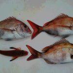 初釣り Ⅱ