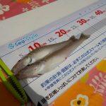キス釣り大会2019 結果報告!